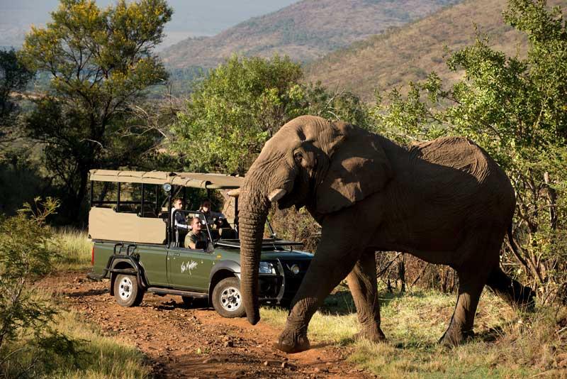 Elefante em Pilanesberg Joanesburgo