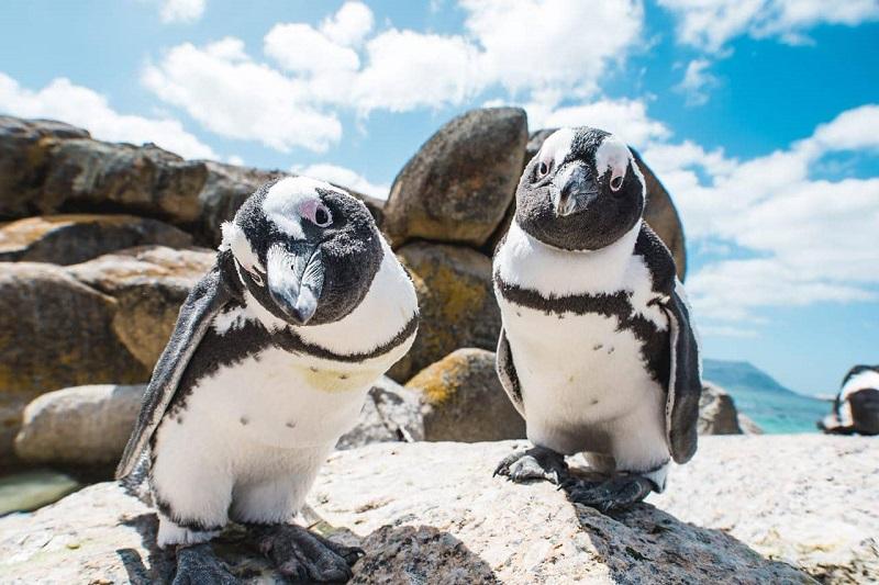 Pontos turísticos na Cidade do Cabo: Bouders Beach