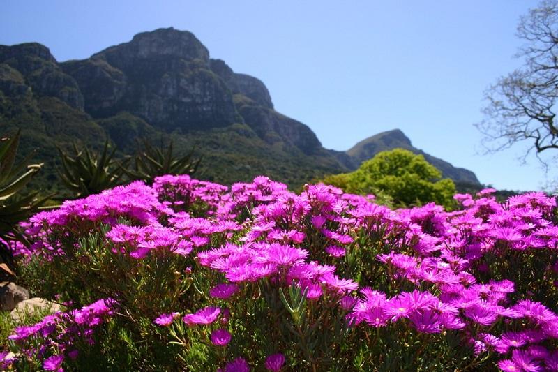 Primavera na África do Sul