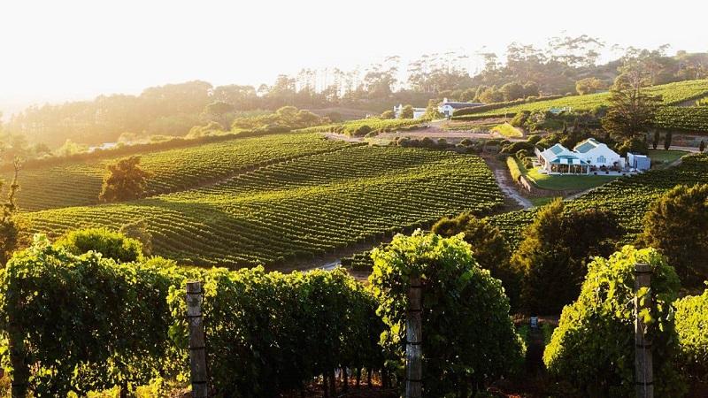 Pontos turísticos na Cidade do Cabo: Vinícolas de Constantia