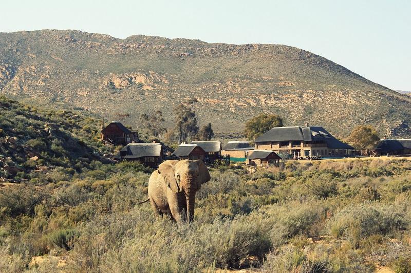 Aquila Private Game Reserve na Cidade do Cabo